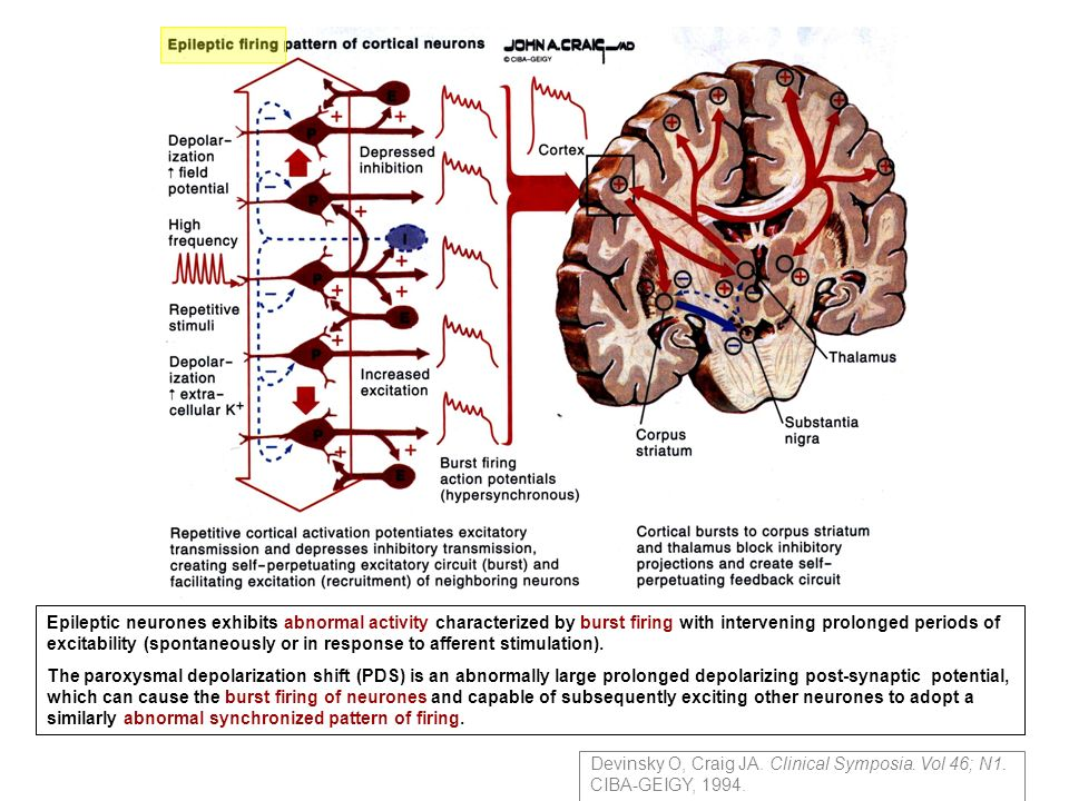Epileptic neurones exhibits abnormal activity characterized by burst firing with intervening prolonged periods of excitability (spontaneously or in re