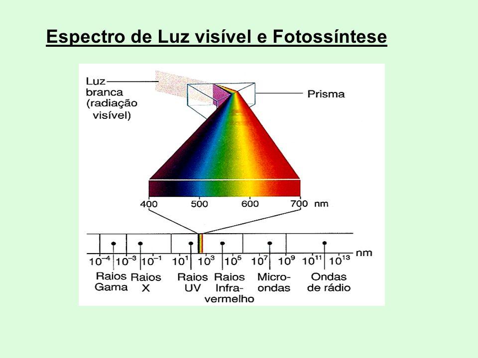 Espectro de Luz visível e Fotossíntese