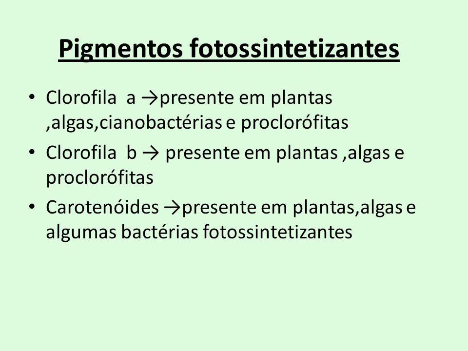 Pigmentos fotossintetizantes Clorofila a presente em plantas,algas,cianobactérias e proclorófitas Clorofila b presente em plantas,algas e proclorófita