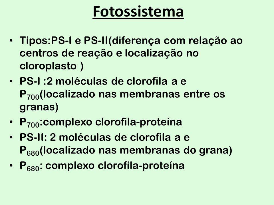 Fotossistema Tipos:PS-I e PS-II(diferença com relação ao centros de reação e localização no cloroplasto ) PS-I :2 moléculas de clorofila a e P 700 (lo
