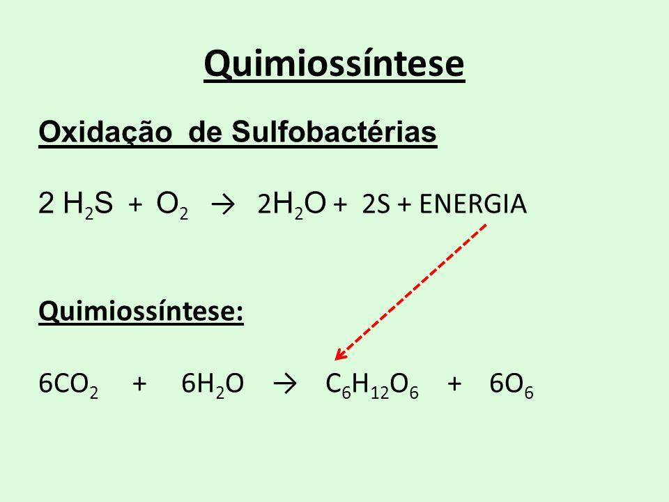 Oxidação de Sulfobactérias 2 H 2 S + O 2 2 H 2 O + 2S + ENERGIA Quimiossíntese: 6CO 2 + 6H 2 O C 6 H 12 O 6 + 6O 6 Quimiossíntese