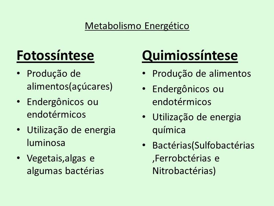Metabolismo Energético Fotossíntese Produção de alimentos(açúcares) Endergônicos ou endotérmicos Utilização de energia luminosa Vegetais,algas e algum
