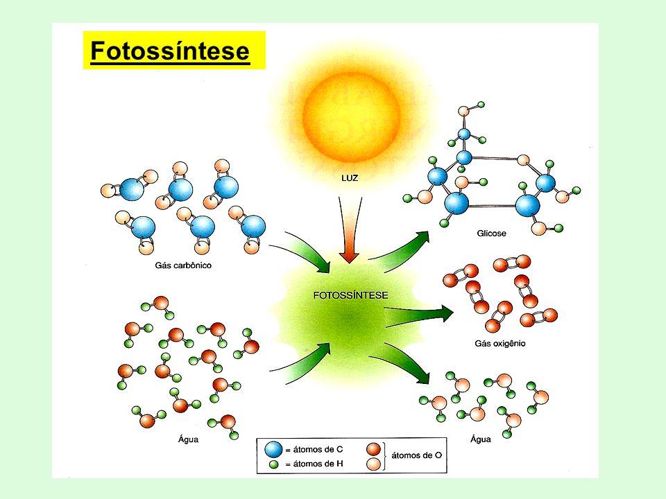 Energia LuminosaEnergia Química Transformação Equação Geral: 6CO 2 + 6H 2 O + LUZ 1C 6 H 12 O 6 + 6O 2 Clorofila