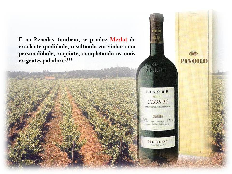 A uva Merlot é plantada principalmente na Califórnia; no Chile; em Bordeaux e no Languedoc-Roussillon, na França; em Ter Venezie, Itália; em Long Isla