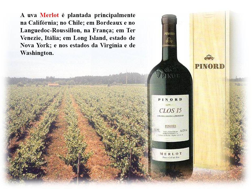 No entanto, no Chile, o Merlot e o Sauvignon Blanc talvez não sejam autênticos. Muitos vinhos chilenos rotulados de Merlot, depois de testes científic