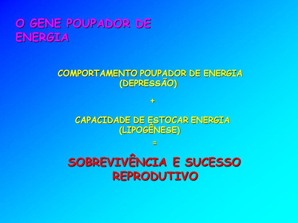 CAPACIDADE DE ESTOCAR ENERGIA (LIPOGÊNESE) O GENE POUPADOR DE ENERGIA SOBREVIVÊNCIA E SUCESSO REPRODUTIVO COMPORTAMENTO POUPADOR DE ENERGIA (DEPRESSÃO) = +