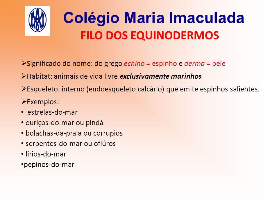 Colégio Maria Imaculada FILO DOS EQUINODERMOS Significado do nome: do grego echino = espinho e derma = pele Habitat: animais de vida livre exclusivame