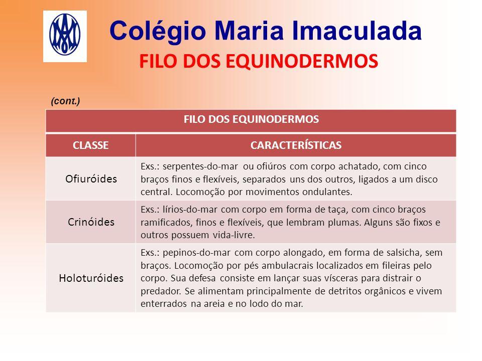 Colégio Maria Imaculada FILO DOS EQUINODERMOS CLASSECARACTERÍSTICAS Ofiuróides Exs.: serpentes-do-mar ou ofiúros com corpo achatado, com cinco braços