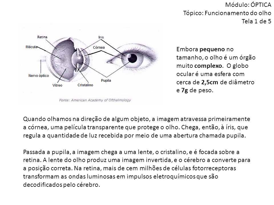 Módulo: ÓPTICA Tópico: Funcionamento do olho Tela 1 de 5 Embora pequeno no tamanho, o olho é um órgão muito complexo. O globo ocular é uma esfera com