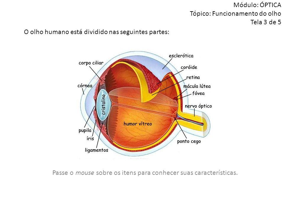 O olho humano está dividido nas seguintes partes: Módulo: ÓPTICA Tópico: Funcionamento do olho Tela 3 de 5 Passe o mouse sobre os itens para conhecer