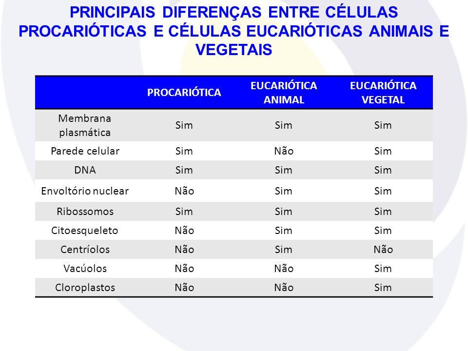 PROCARIÓTICA EUCARIÓTICA ANIMAL EUCARIÓTICA VEGETAL Membrana plasmática Sim Parede celularSimNãoSim DNASim Envoltório nuclearNãoSim RibossomosSim Cito