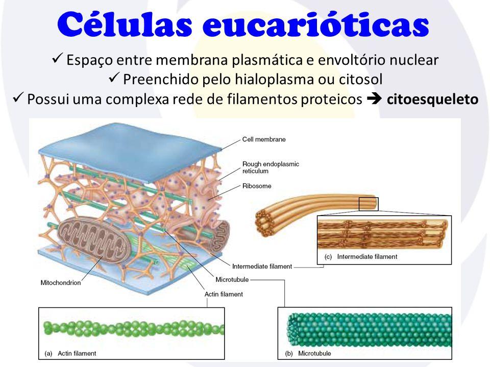 Células eucarióticas Espaço entre membrana plasmática e envoltório nuclear Preenchido pelo hialoplasma ou citosol Possui uma complexa rede de filament