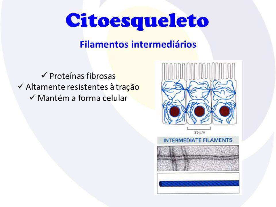 Filamentos intermediários Proteínas fibrosas Altamente resistentes à tração Mantém a forma celular Citoesqueleto