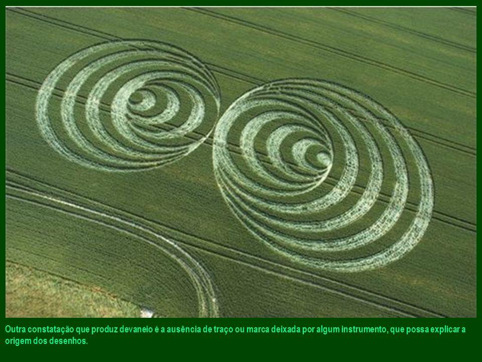 As primeiras observações feitas sobre o terreno deixam as pessoas perplexas, pois os caules dos cereais não são quebrados, mas torcidos em espiral, em