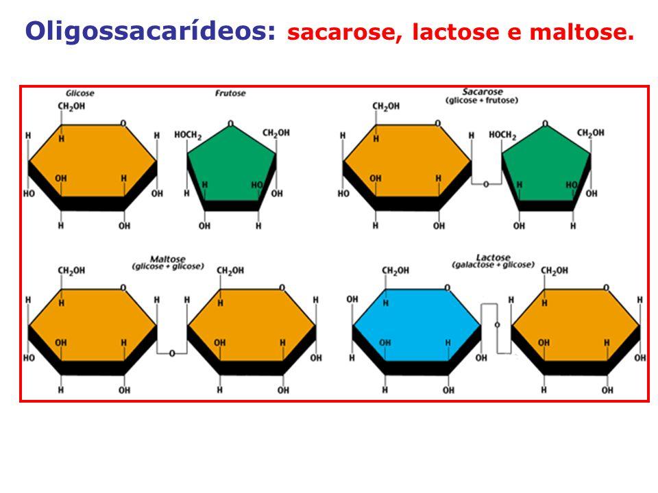 Oligossacarídeos: sacarose, lactose e maltose.