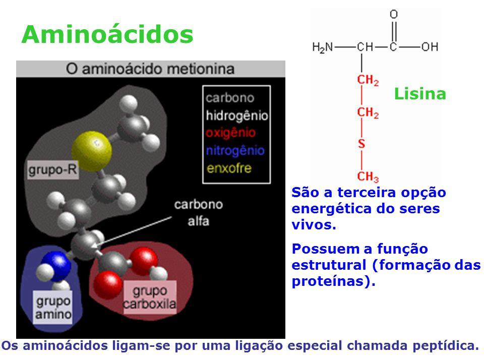 Aminoácidos São a terceira opção energética do seres vivos.