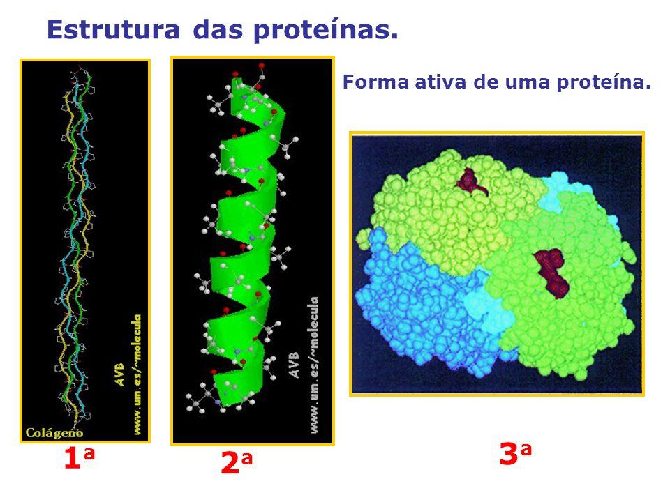 Forma ativa de uma proteína. 1a1a 2a2a 3a3a Estrutura das proteínas.