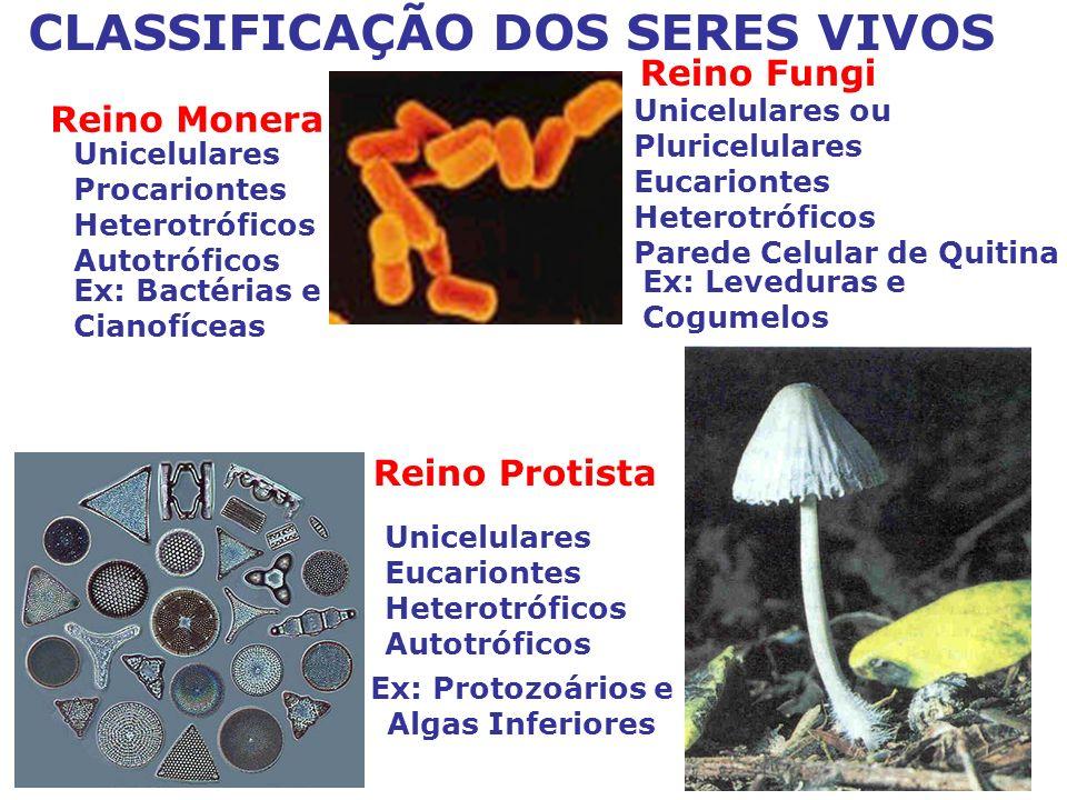CLASSIFICAÇÃO DOS SERES VIVOS Reino Fungi Unicelulares Eucariontes Heterotróficos Autotróficos Ex: Bactérias e Cianofíceas Unicelulares Procariontes Heterotróficos Autotróficos Ex: Protozoários e Algas Inferiores Unicelulares ou Pluricelulares Eucariontes Heterotróficos Parede Celular de Quitina Ex: Leveduras e Cogumelos Reino Protista Reino Monera