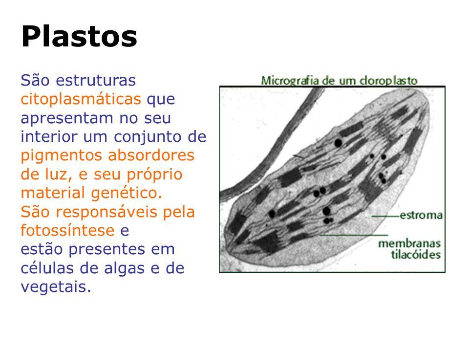 Plastos São estruturas citoplasmáticas que apresentam no seu interior um conjunto de pigmentos absordores de luz, e seu próprio material genético.