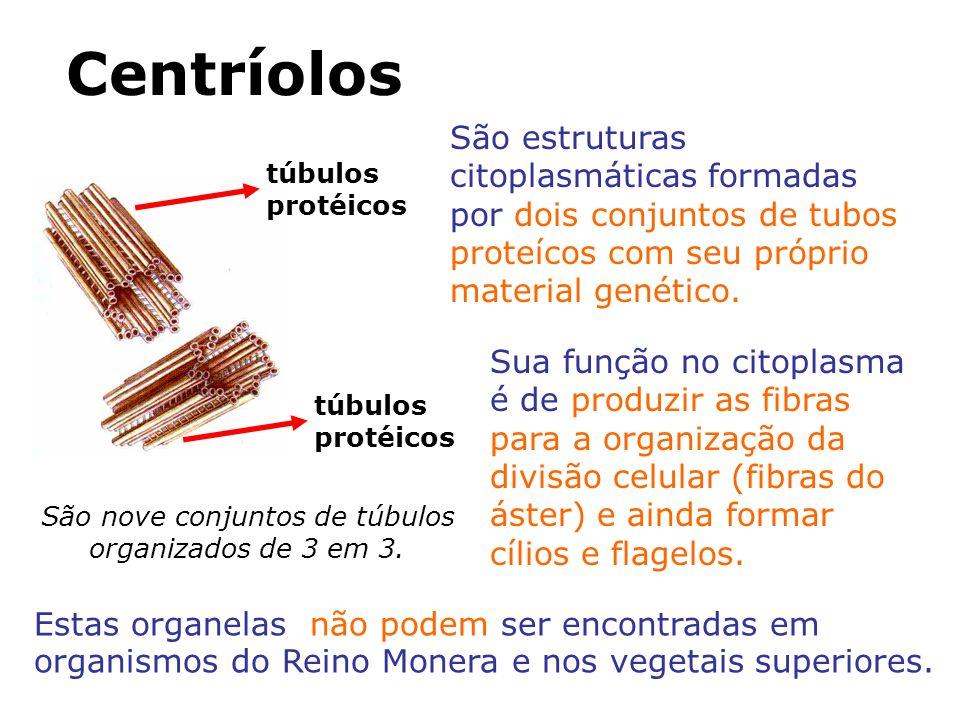 Centríolos São estruturas citoplasmáticas formadas por dois conjuntos de tubos proteícos com seu próprio material genético.