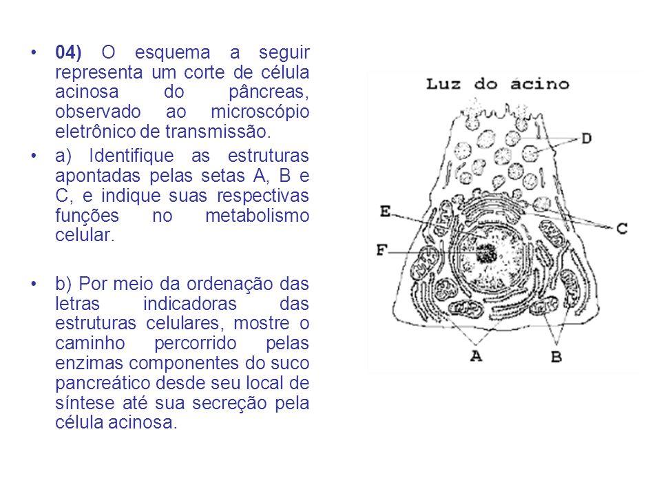 04) O esquema a seguir representa um corte de célula acinosa do pâncreas, observado ao microscópio eletrônico de transmissão.