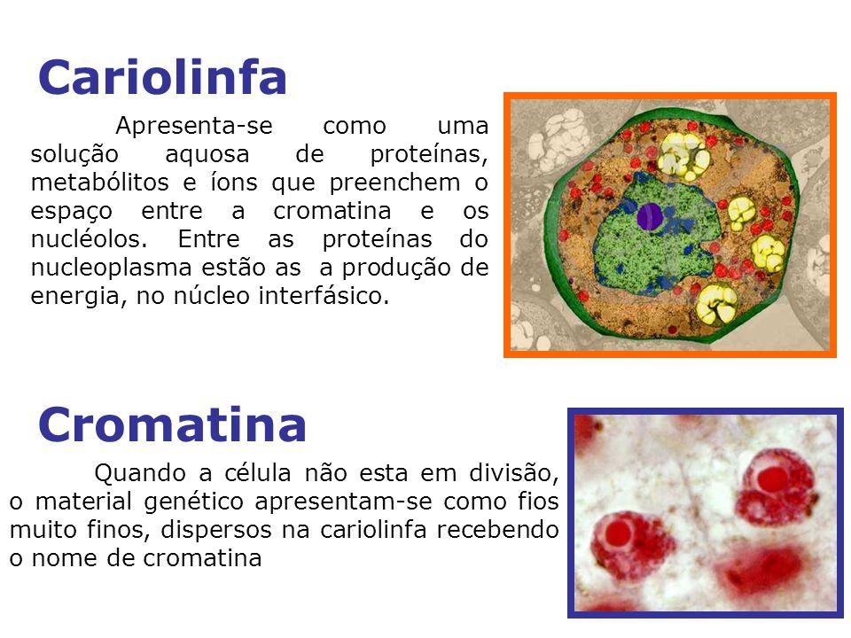 Apresenta-se como uma solução aquosa de proteínas, metabólitos e íons que preenchem o espaço entre a cromatina e os nucléolos.