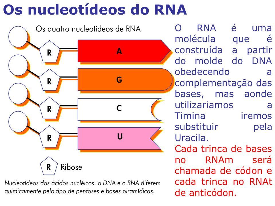 O RNA é uma molécula que é construída a partir do molde do DNA obedecendo a complementação das bases, mas aonde utilizariamos a Timina iremos substituir pela Uracila.