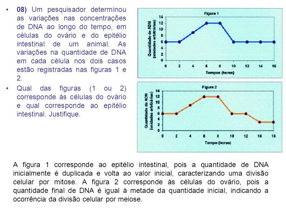 08) Um pesquisador determinou as variações nas concentrações de DNA ao longo do tempo, em células do ovário e do epitélio intestinal de um animal.