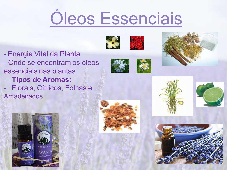 Óleos Essenciais - Energia Vital da Planta - Onde se encontram os óleos essenciais nas plantas -Tipos de Aromas: -Florais, Cítricos, Folhas e Amadeirados