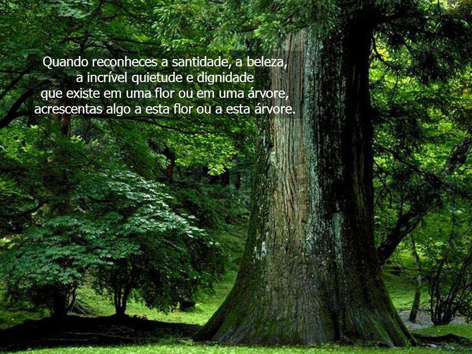 Não estás separado da natureza.