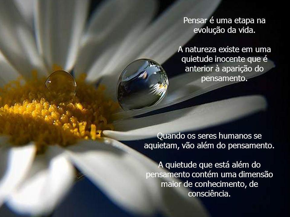 Quando reconheces a santidade, a beleza, a incrível quietude e dignidade que existe em uma flor ou em uma árvore, acrescentas algo a esta flor ou a es