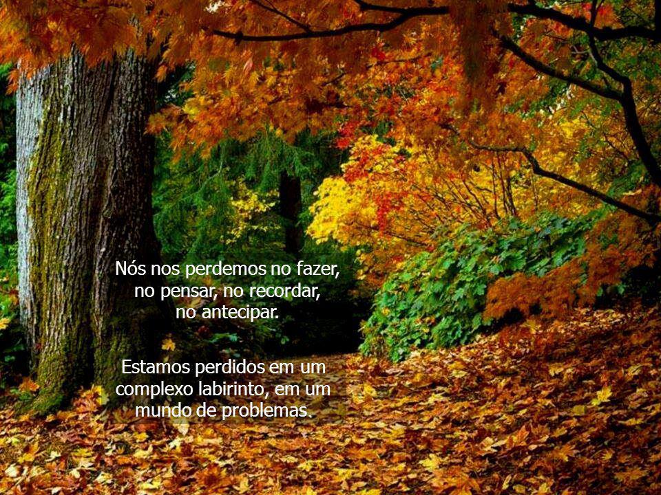 Também necessitamos da natureza para que nos ensine o caminho para casa, o caminho para sairmos da prisão de nossas mentes. Dependemos da natureza não