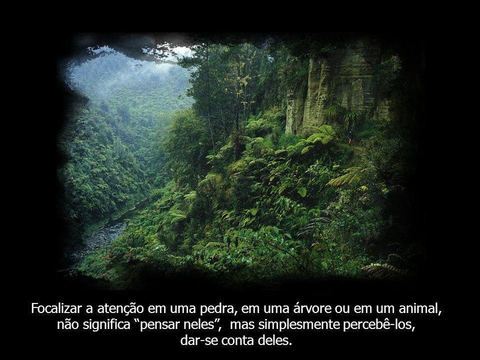 Esquecemos aquilo que as rochas, as plantas e os animais já sabem. Nos esquecemos de Ser; de sermos nós mesmos, de estar em silêncio, de estar onde es