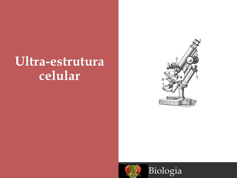 Biologia Ultra-estrutura celular