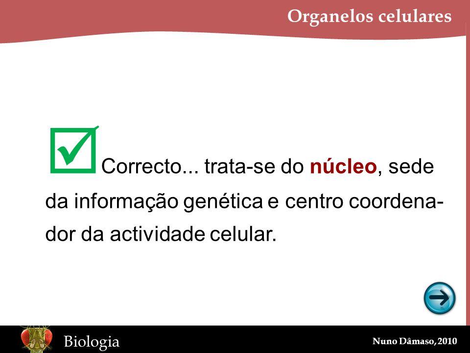 www.BioEdOnline.org Biologia Nuno Dâmaso, 2010 Organelos celulares Correcto... trata-se do núcleo, sede da informação genética e centro coordena- dor
