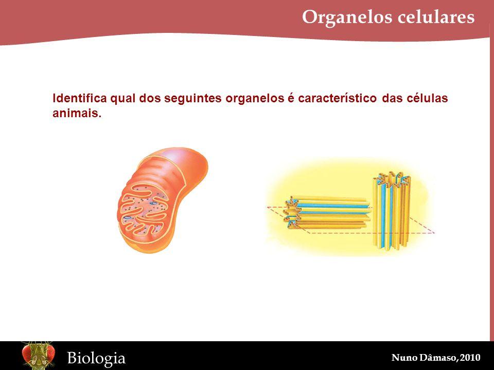 www.BioEdOnline.org Biologia Nuno Dâmaso, 2010 Organelos celulares Identifica qual dos seguintes organelos é característico das células animais.
