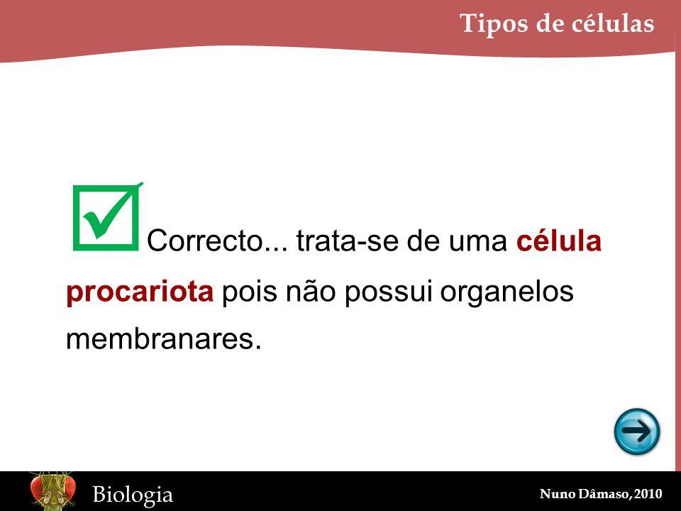 www.BioEdOnline.org Biologia Nuno Dâmaso, 2010 Tipos de células Correcto... trata-se de uma célula procariota pois não possui organelos membranares.