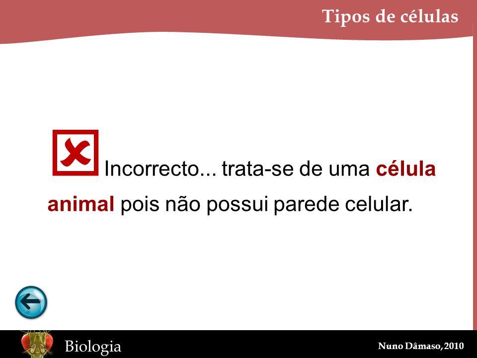 www.BioEdOnline.org Biologia Nuno Dâmaso, 2010 Tipos de células Incorrecto... trata-se de uma célula animal pois não possui parede celular.