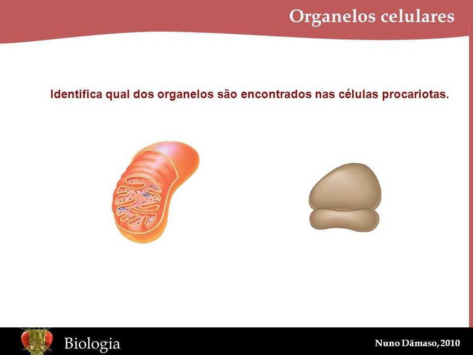 www.BioEdOnline.org Biologia Nuno Dâmaso, 2010 Organelos celulares Identifica qual dos organelos são encontrados nas células procariotas.