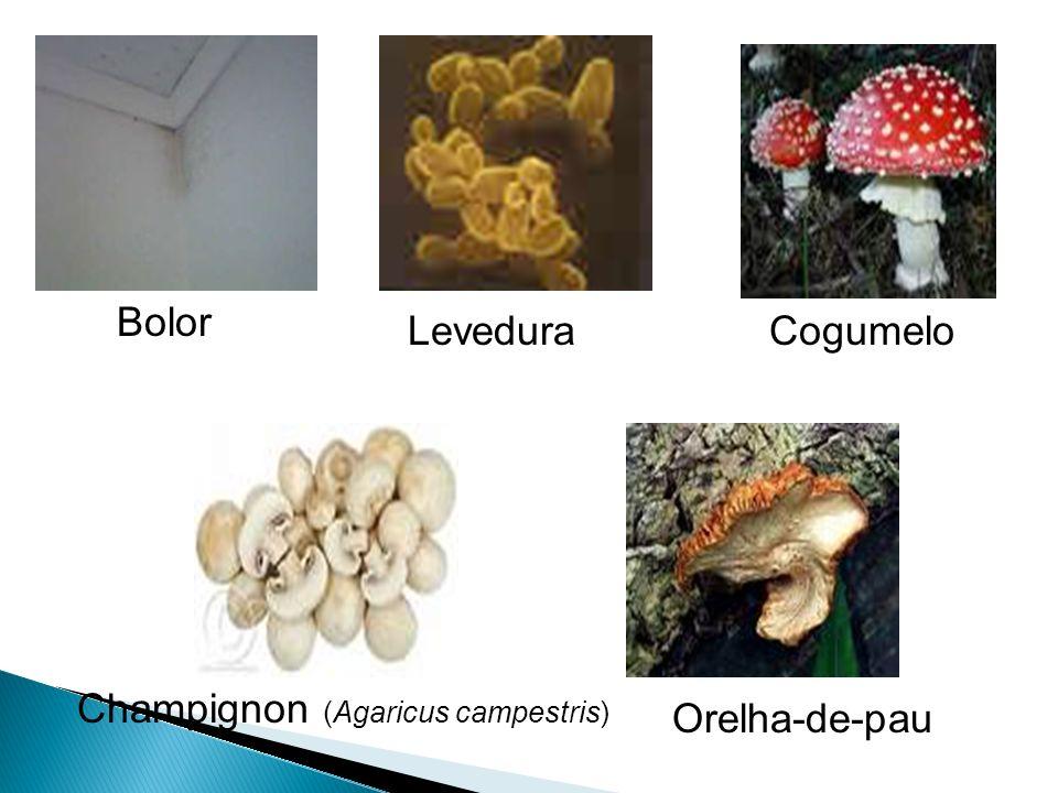 Ascomicetos: Bolor rosado do pão, leveduras Basidiomicetos: cogumelos, orelhas-de-pau, ferrugem Zigomicetos: Bolor preto do pão, algumas micorrizas De