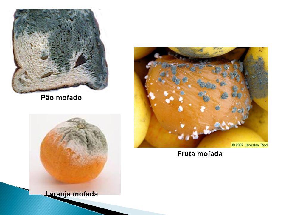 Aspergillus nidulans