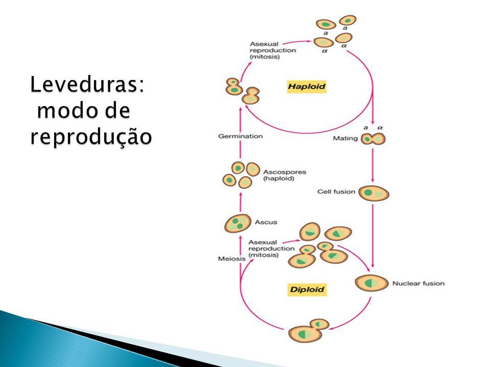Artrósporos Coccidioides imitis