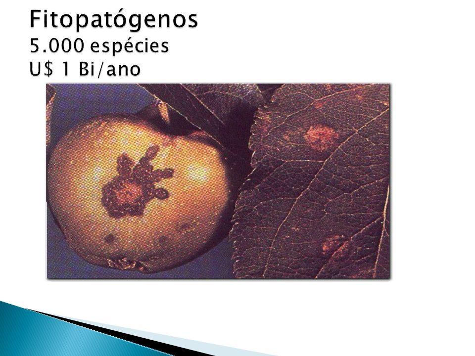 Amanita e Helvella desconforto gastrointestinal, dano hepático e/ou renal A. muscaria