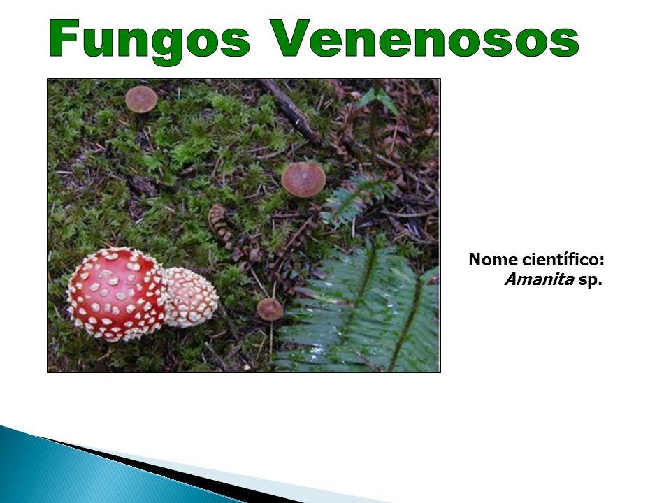 Os fungos são muito utilizados na nossa alimentação: a-b) cogumelos que comemos vulgarmente; c) o pão e o vinho resultam de fermentações realizadas po
