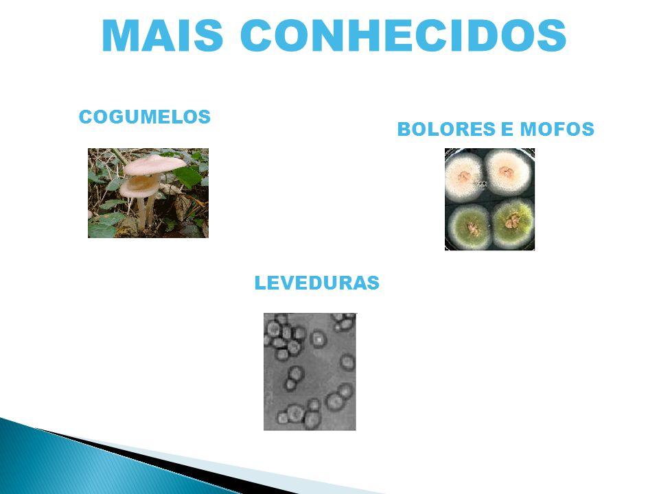 Ramo da Biologia que estuda os fungos MICOLOGIA