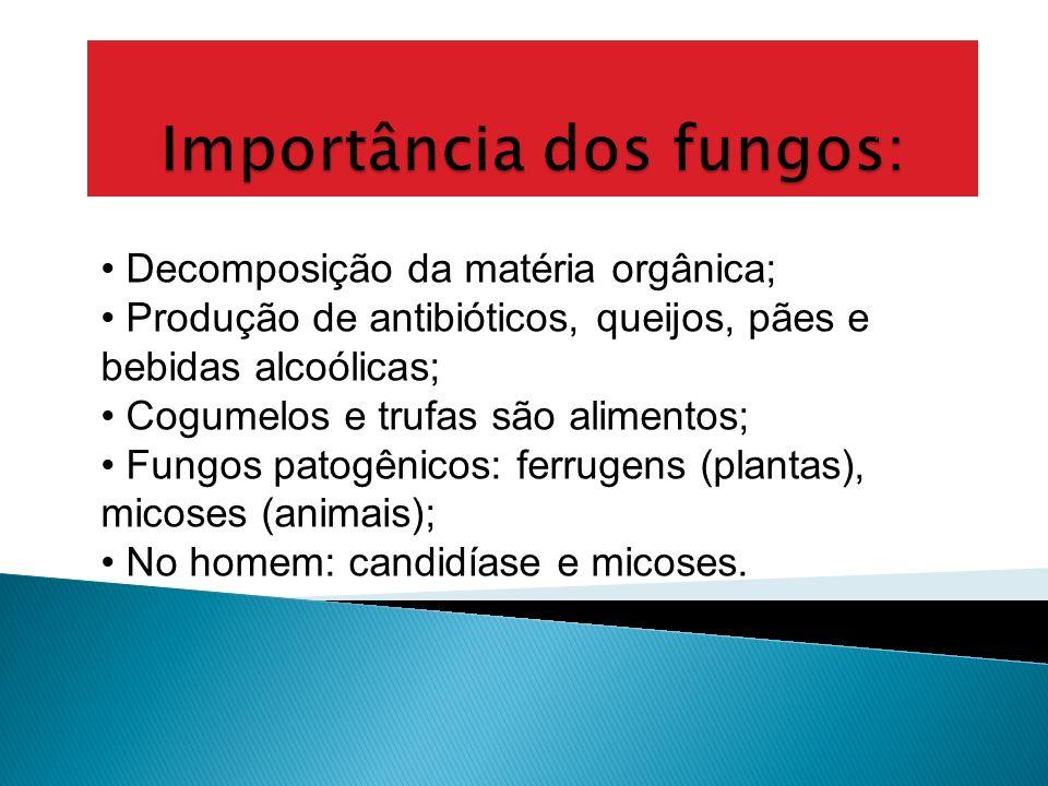 Reprodução: assexuada (fragmentação, brotamento ou esporulação); A esporulação ocorre nos gêneros Rhizopus ; O brotamento ocorre com Saccharomyces; Li