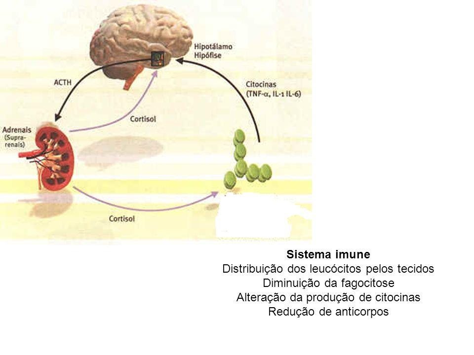 Sistema imune Distribuição dos leucócitos pelos tecidos Diminuição da fagocitose Alteração da produção de citocinas Redução de anticorpos