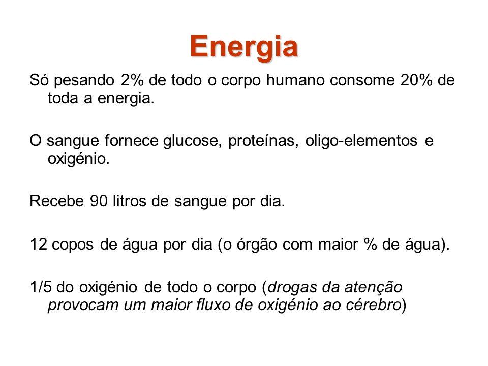 Energia Só pesando 2% de todo o corpo humano consome 20% de toda a energia.