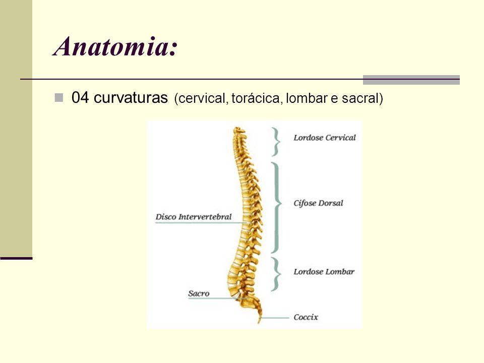 Constituição: 07 vértebras cervicais; 12 vértebras torácicas; 05 vértebras lombares; 05 vértebras sacrais; 04 coccígeas.