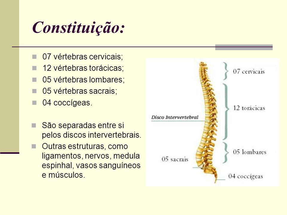 Vértebra As vértebras apresentam vários buracos (forames) no osso, para a passagem dos nervos e vasos sanguíneos.